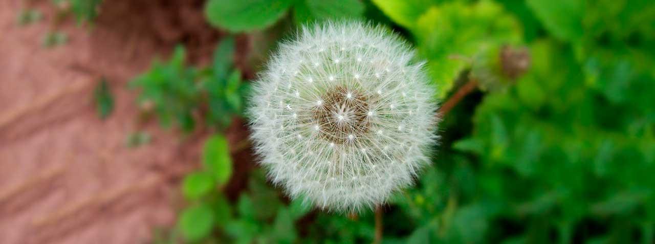 Alergias. ¿Qué Son Y Cómo Combatirlas?